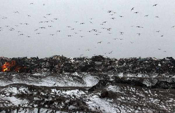 Snow falls as gulls fly over a large