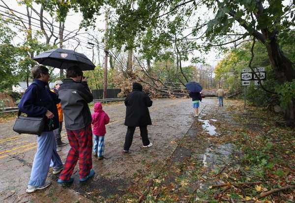 Residents view downed trees completely blocking Cold Spring