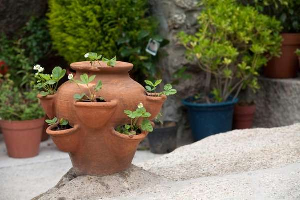 Clay pots tend to crack with the freeze-thaw