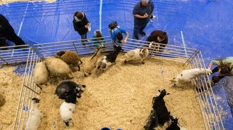 A petting zoo was part of the activities