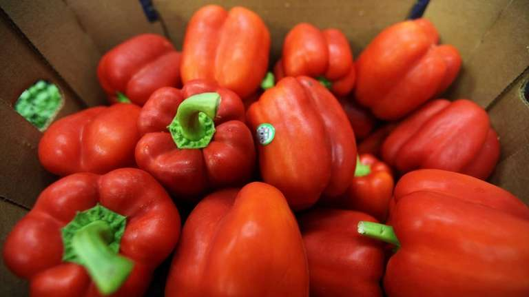 Red peppers are ready for the kitchens and