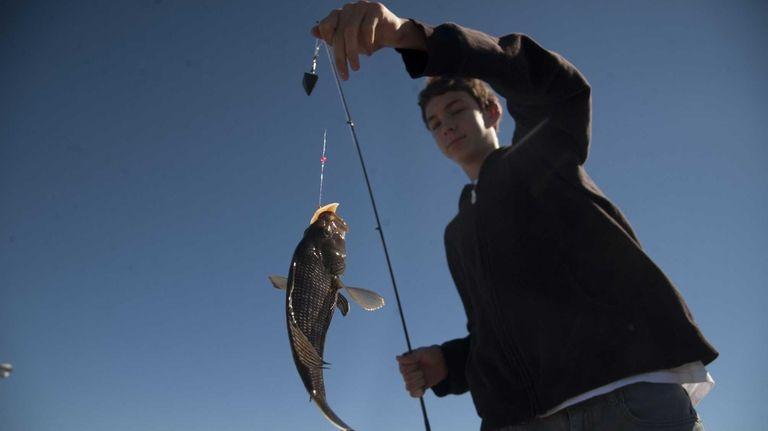 Black sea bass making presence known   Newsday