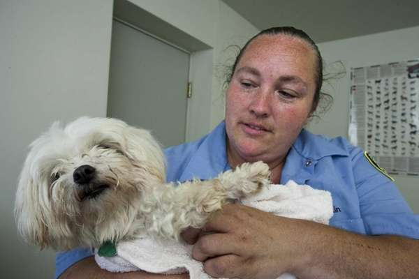 Kennel attendant Vicki Cain with Jackso, a Maltese
