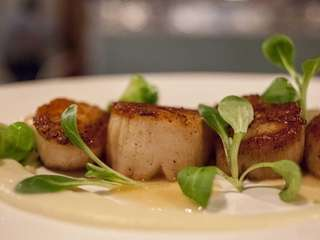 A seared sea scallop entree with cauliflower puree,