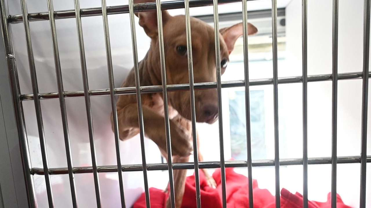 From Labrador retriever puppies to older rescues, organizations