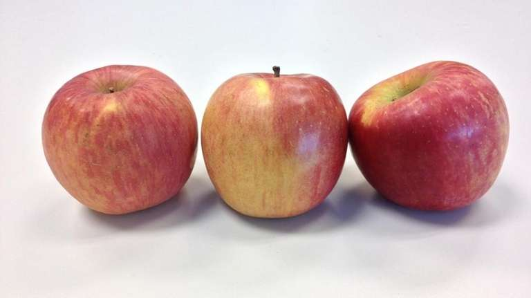 A Grapple is an apple infused with artificial