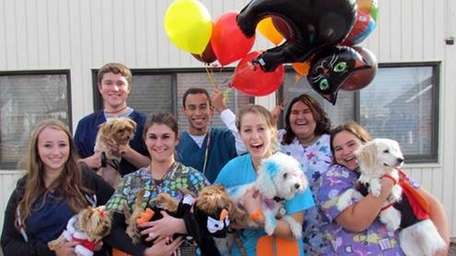 A recent parade of dogs in costumes at