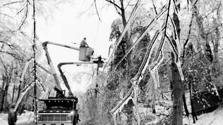 Icicles hanging from tree branchs as LILCO crews
