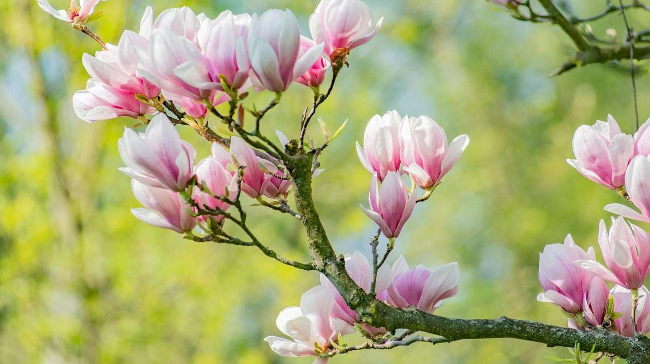 30 gardening chores to tackle in April
