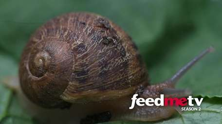 Taylor Knapp is cultivating snails on the North