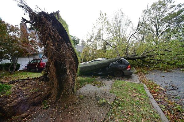 A tree has fallen on a car on