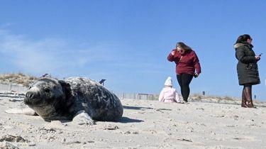 Beachgoers at Smith Point County Park's beach flock