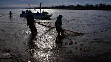 Menhaden fishermen haul in their seine net on