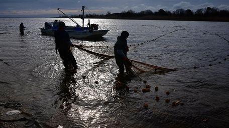 Menhaden fishermen haul in their seine net on