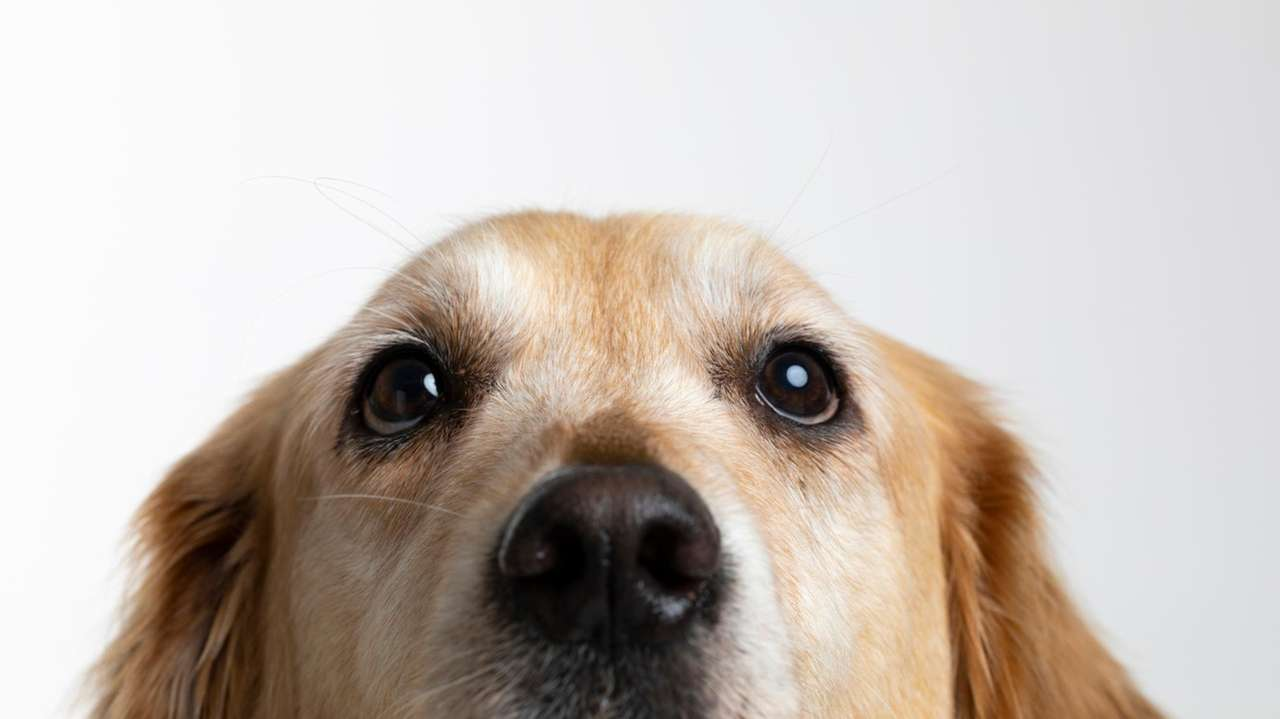 How to talk to your dog about social distancing