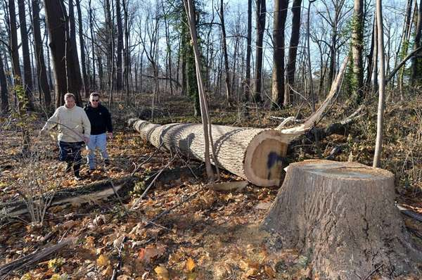 Tree cutting at Nassau preserve spurs anger