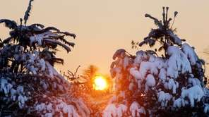 After snowfall, gently brush snow from evergreen branches