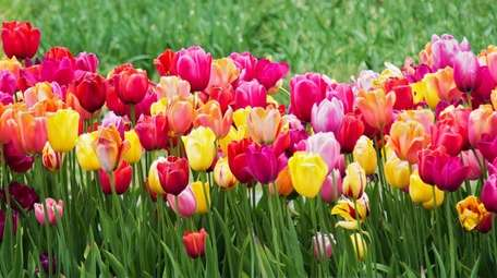 Start prepping your garden for spring by completing