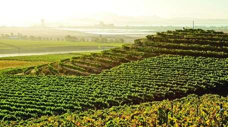 The gently sloping hills at Bouchaine Vineyards overlook