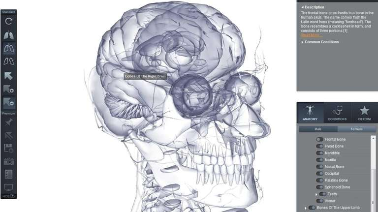 BioDigital Human offers 3-D internal views of male