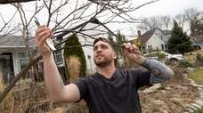 Anthony Marinello, prunes an eastern redbud in his