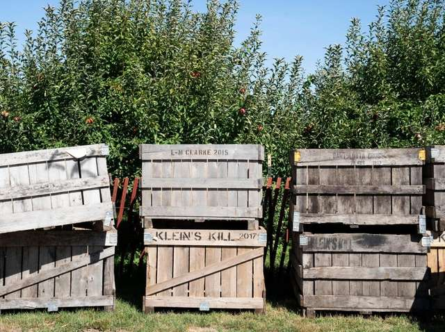 Crates of harvested apples at Woodside Orchards in