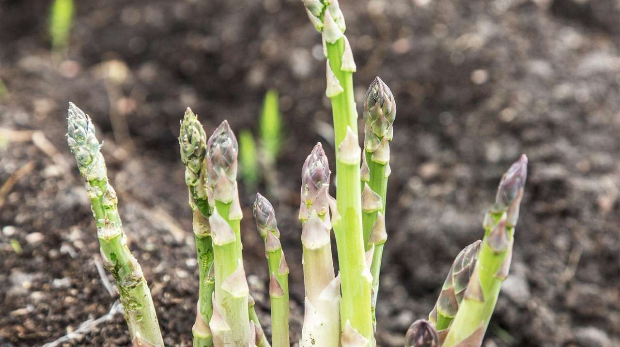 7 perennial edibles you can plant now