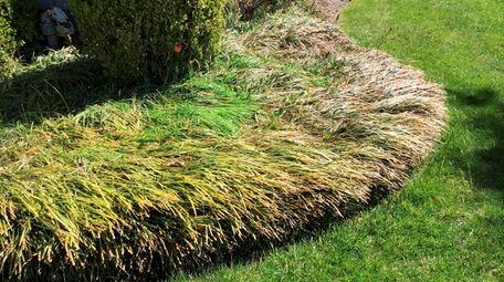 Liriope fills in a garden border outside reader