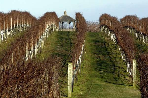 Along Montauk Highway, Sagaponack, the vineyards of Wolffer