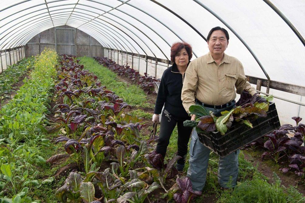 Julie and Davie Yen began their Yaphank farm