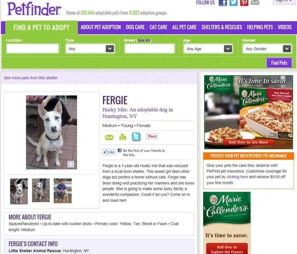 Petfinder.com is a great place to start to