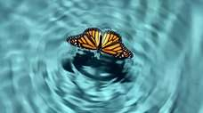 Each of us is a butterfly. We all