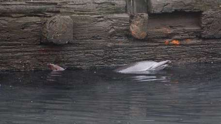 The NYPD and marine biologists responded to the