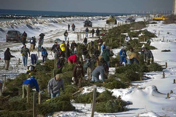 Volunteers lay Christmas trees on the beach in