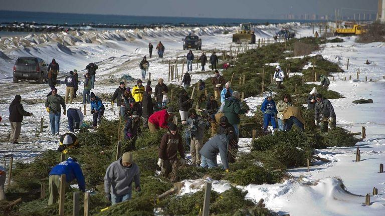 Volunteers lay Christmas trees on the beach in