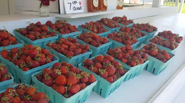 Fresh picked strawberries at Patty's Berries and Bunches