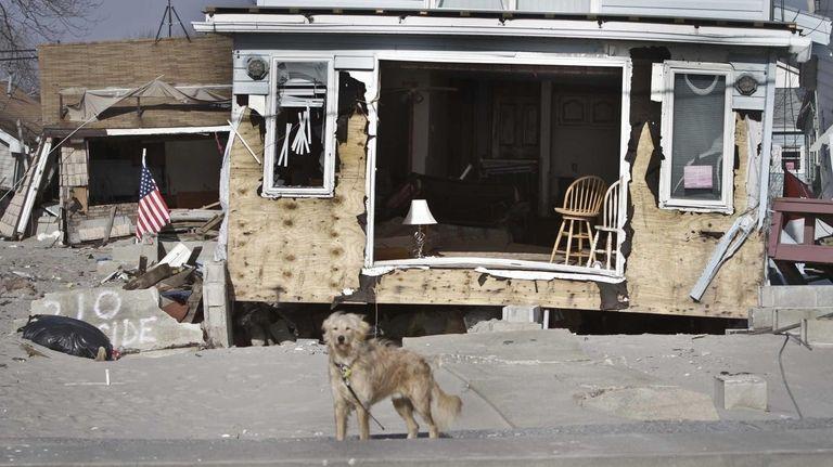 A dog wanders through the neighborhood of homes