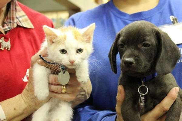 Kaepernick Kitten and Joe Flacco Puppy were getting
