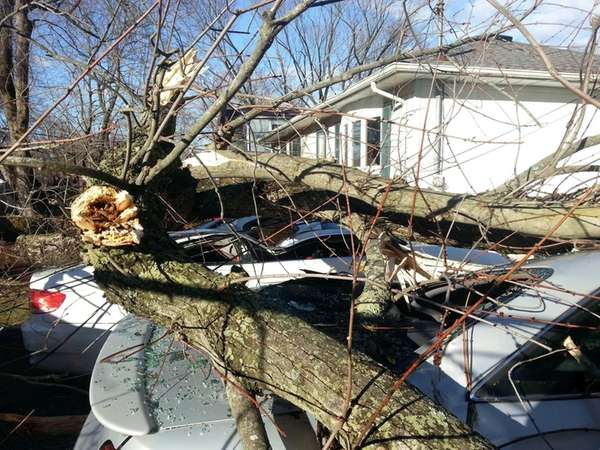 A downed tree covers parked cars on Henry