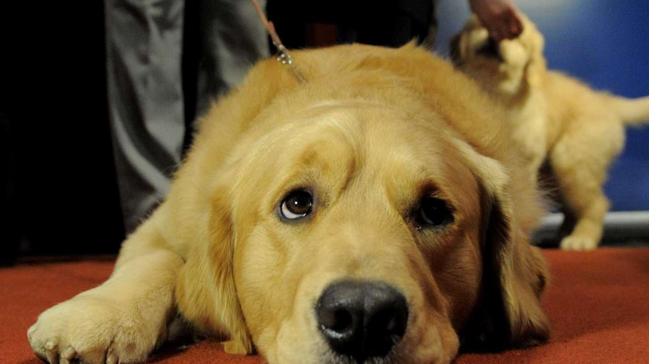 American Kennel Club Releases Its Top 10 Most Popular Dog