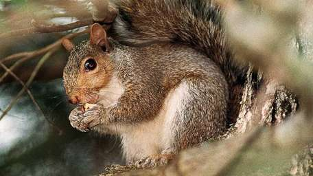"The seventh annual Holley ""Squirrel Slam"" to be"