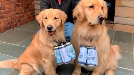 The Golden Retrievers of Six Harbors Brewing Company