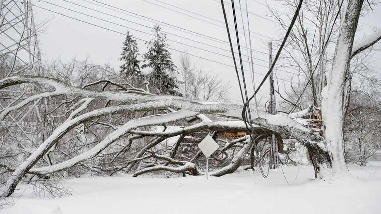 A downed tree took out power lines on