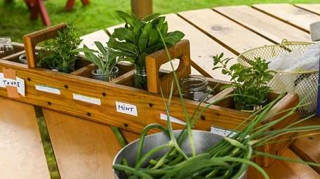 "Herbs at the ""sharing table"" at the Sisters"