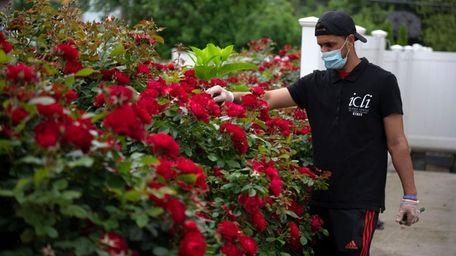 Umair Ashgar, 23, of Westbury, tends to flowers