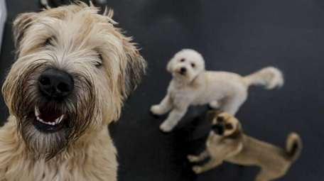 Fido Fitness ClubPet in Woodmere.
