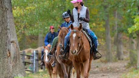 Equestrian volunteer Renalda Franks leads Walter and Linda