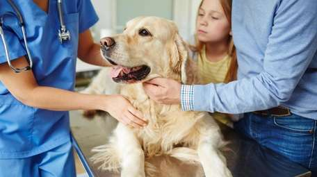 Before departing, check in with your vet to