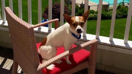 Ramey, a foster dog, enjoys a room with