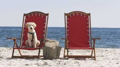Many hotels will accommodate pets these days, but